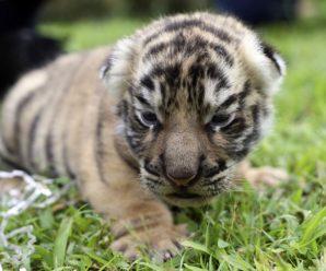 25 удивительный идиоматических выражений о животных на английском языке